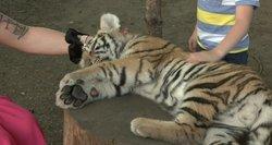 Nori drausti mokamas pramogas su zoologijos sodo gyvūnais: dabar juos galima pačiupinėti