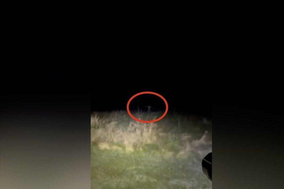 Naktį nufilmuotas vaizdas laukuose pašiurpino: nesupranta, kas užfiksuota įraše (nuotr. stop kadras)