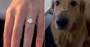 Šuo prarijo sužadėtuvių žiedą