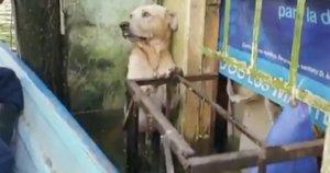 Šuo (nuotr. stop kadras)